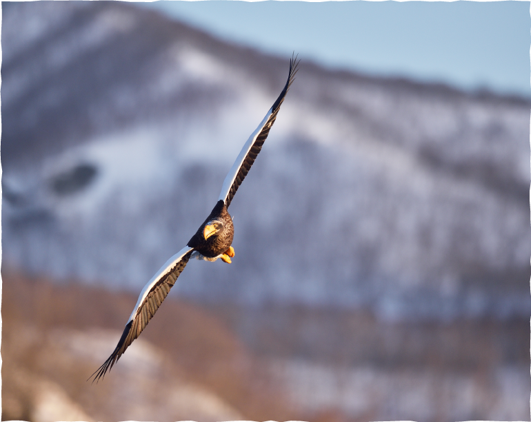 Bird Watching Tour (Participants and Schedules are Limited in Availability)