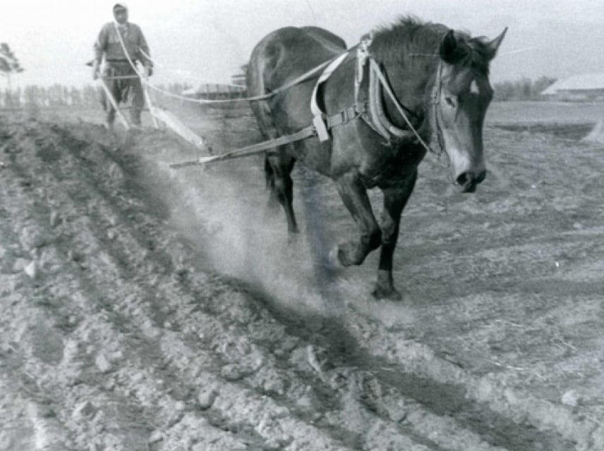 Horses and the History of Pioneering