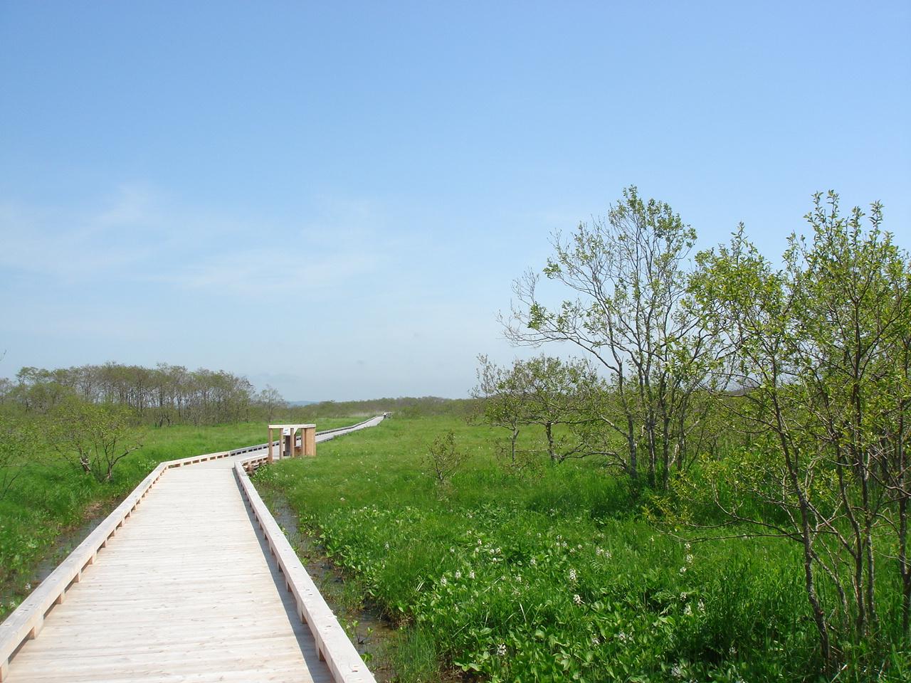 釧路湿原 ー そのスケールに圧倒される日本最大の湿原