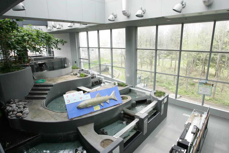 標津 サーモン科学館