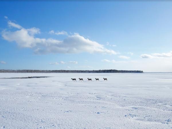 【日帰りプラン】ひがし北海道エクスプレスバスで行く!まるで日本のウユニ塩湖!野付半島「氷平線」ウォークパック(阿寒発着)