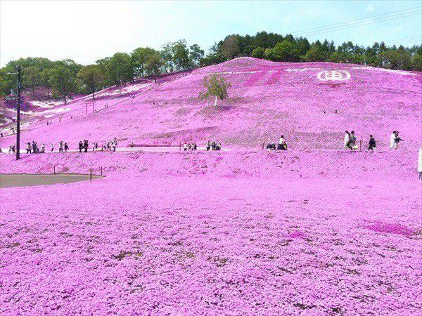 ひがしもことの芝桜をバスで見に行こう!芝桜公園往復バス&入園付!網走宿泊プラン(2泊3日)