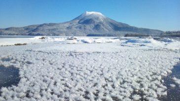 阿寒湖上に咲く氷の花 フロストフラワー