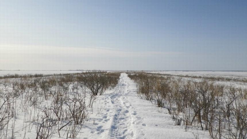 海に広がる見渡す限りの氷の大地 野付半島の氷平線