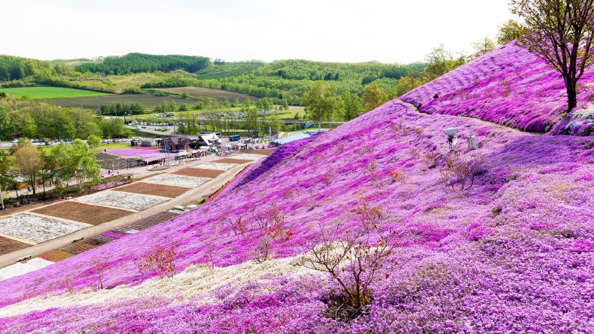 ~冬から春へ移りゆく~ひがし北海道 一度は訪れたい7つの春スポット&イベント