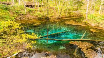 神の子池 ー 森に佇む神秘的なコバルトブルーの泉|清里町