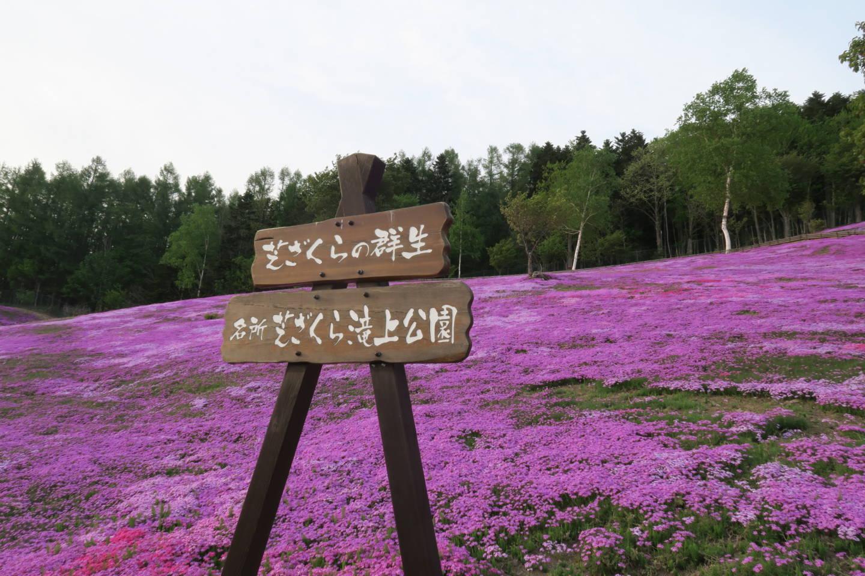 芝ざくら滝上公園